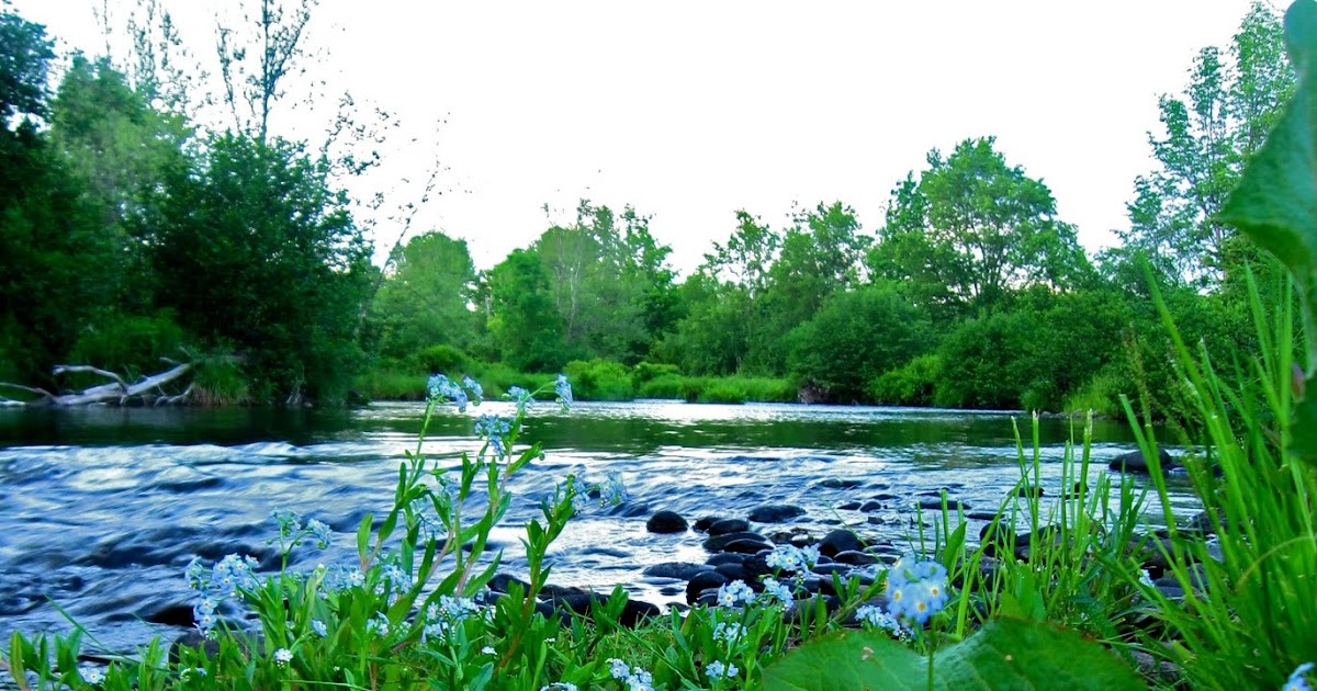 Sweet and salt fly fishing the catskills new york for Saltwater fishing license ny
