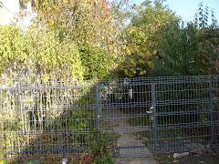 gardul nou octombrie 2008