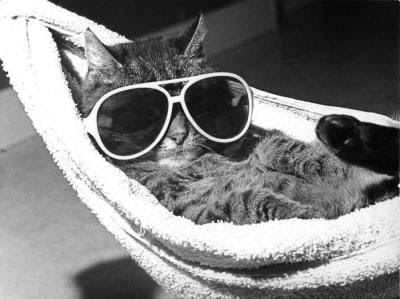 http://2.bp.blogspot.com/_zx740v7y8ic/ShGejfZNorI/AAAAAAAAB08/0x9xpbFDrnM/s400/Cat-with-sunglasses-lying-in-a-hammock-R-diger-Poborsky-200540.jpg