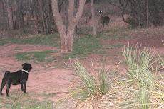 TaZzi Palo Duro State Park..Texas