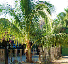 My home in the Baja