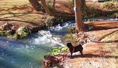 Sedona Oak Creek & TaZzi