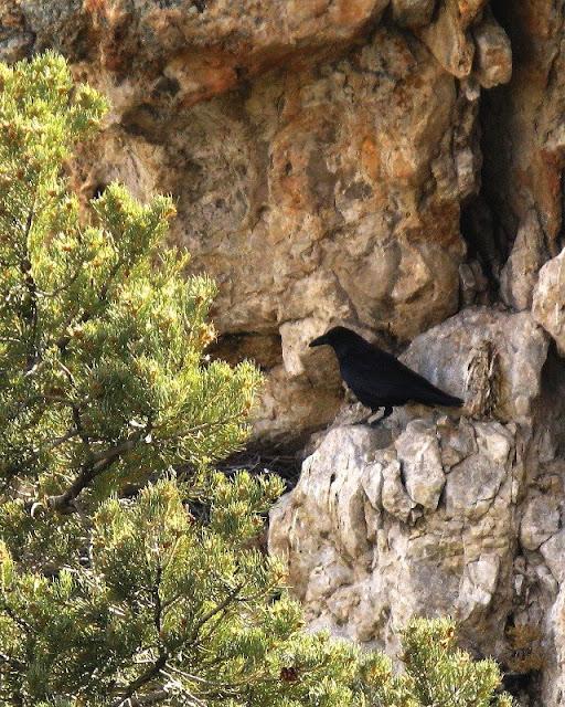 into nest