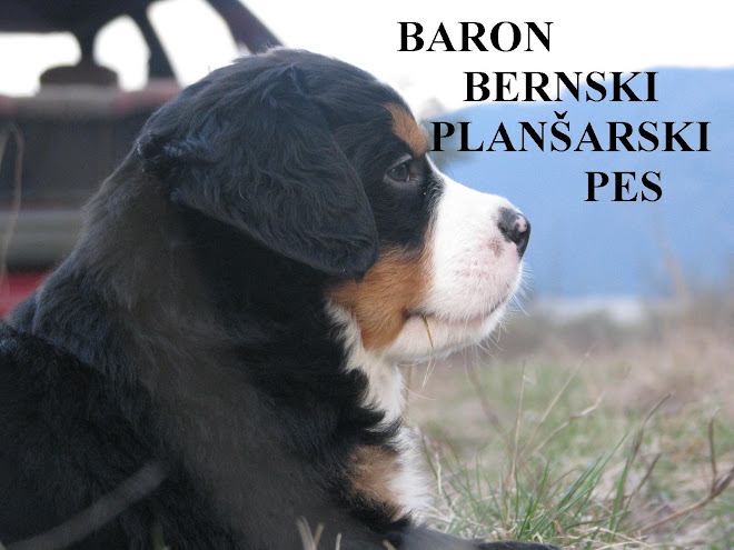 baron bernski planšarski pes