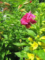 Blommorna i min trädgård!