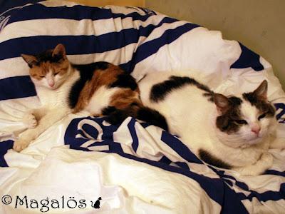 Klockan 15.54 - Våra katter tillsammans i dotterns säng
