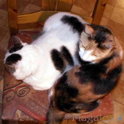 Våra två katter som samsas på samma köksstol.