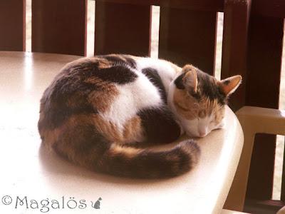Kattfröken tar en siesta mitt på balkongbordet.