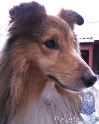 Ny bild på väninnans hund.