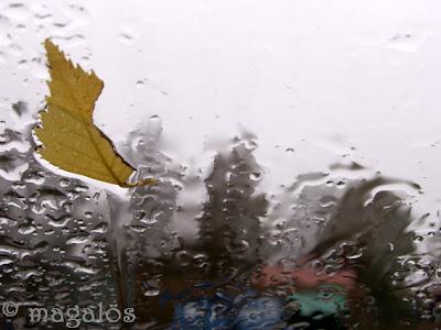 Vindrutan på vår bil en regnig dag, med höstlöv.