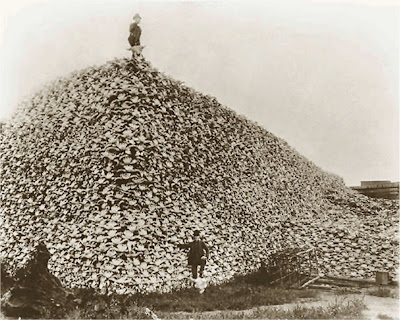 This is a456 the 98th meridian photograph mid 1870s of a pile of american bison skulls waiting to be ground for fertilizer burton historical collection denver pub lib publicscrutiny Gallery