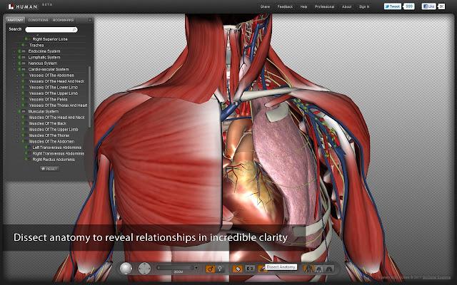BIODIGITAL HUMAN: Humano Biodigital - EDUCAR Y MOTIVAR