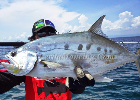 Handline Fishing Like Pro Got Monster QueenFish