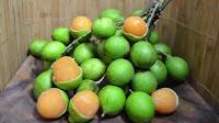 fruit around the world, strange fruit, strange fruit around the world, crazy fruit, crazy fruit around the world, MAMONCILLO