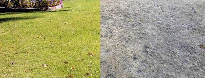 Métodos para reviver um gramado morto