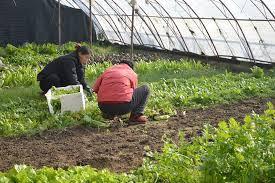 peluang usaha pertanian organik