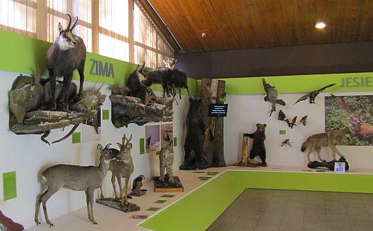 Muzeum Przyrodnicze TPN.