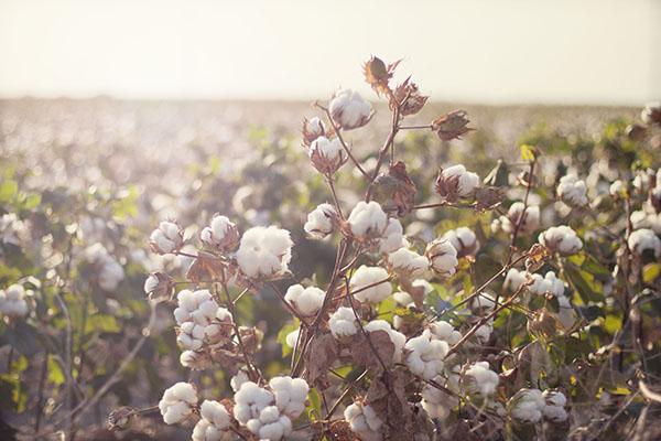innovación-Cotton-USA-Colombiamoda-2018