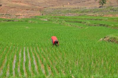 Madagascar : une nouvelle foire internationale pour relancer l'Agriculture