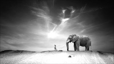 Walking With Elephants Documentary