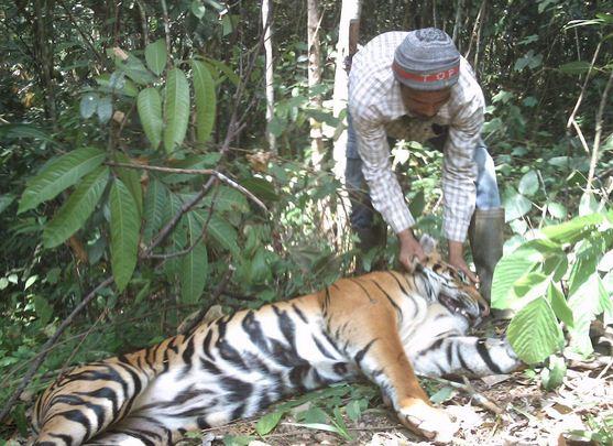Penyebab Kepunahan Makhluk Hidup dan Upaya Pelestariannya