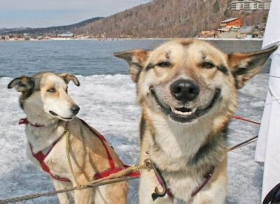 Image result for dogs laughing
