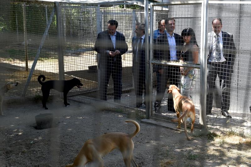 Centro Municipal de Recolha Oficial de Animais de Companhia de Braga