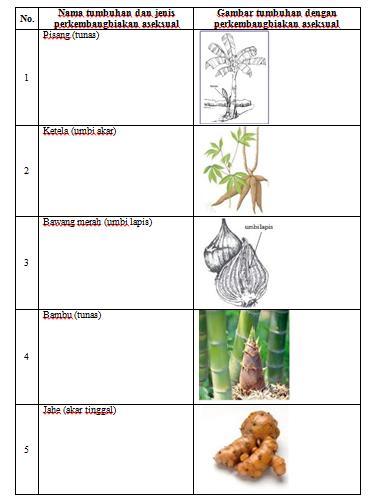 Perkembangan aseksual alami pada tumbuhan