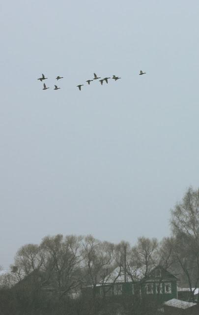утки летят на юг