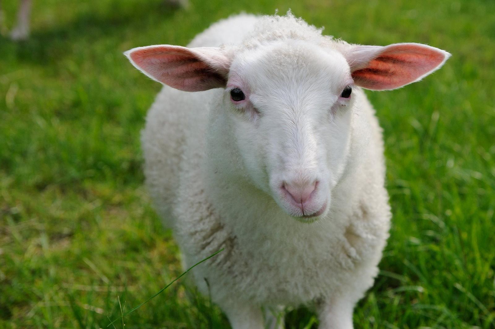 20 Beautiful Animal Pictures (20 Pics)  Amazing Creatures