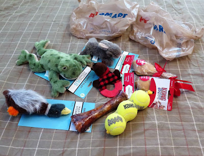 Dogs' Christmas Presents!