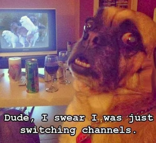 Funny Switching Channels Dog - Dude, I swear I was just switching channels