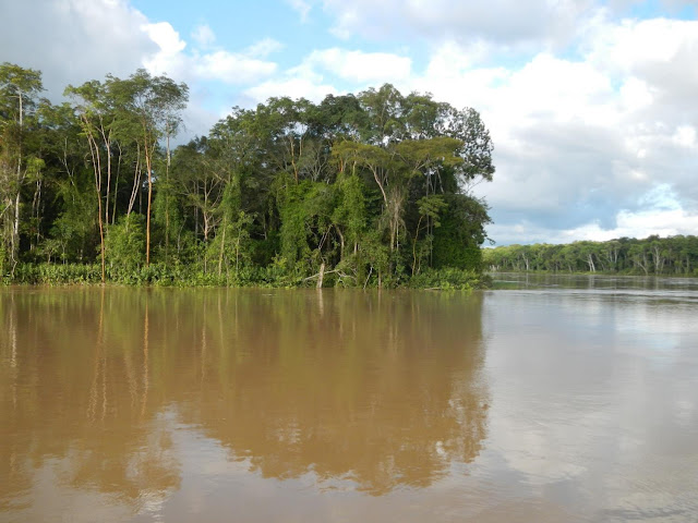Enormous biodiversity in Amazonia: Unexpected biogeographical boundaries