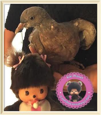 Maddy la Bebichhichi et Colombine le bébé pigeon - oisillon - oiseau - pigeonneau