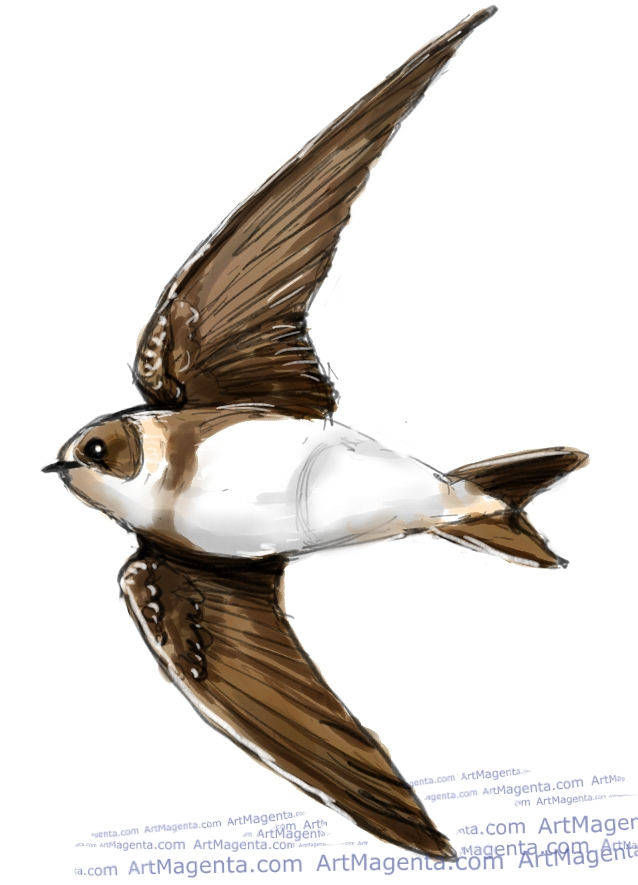 Sand Martin ketch painting. Bird art drawing by illustrator Artmagenta