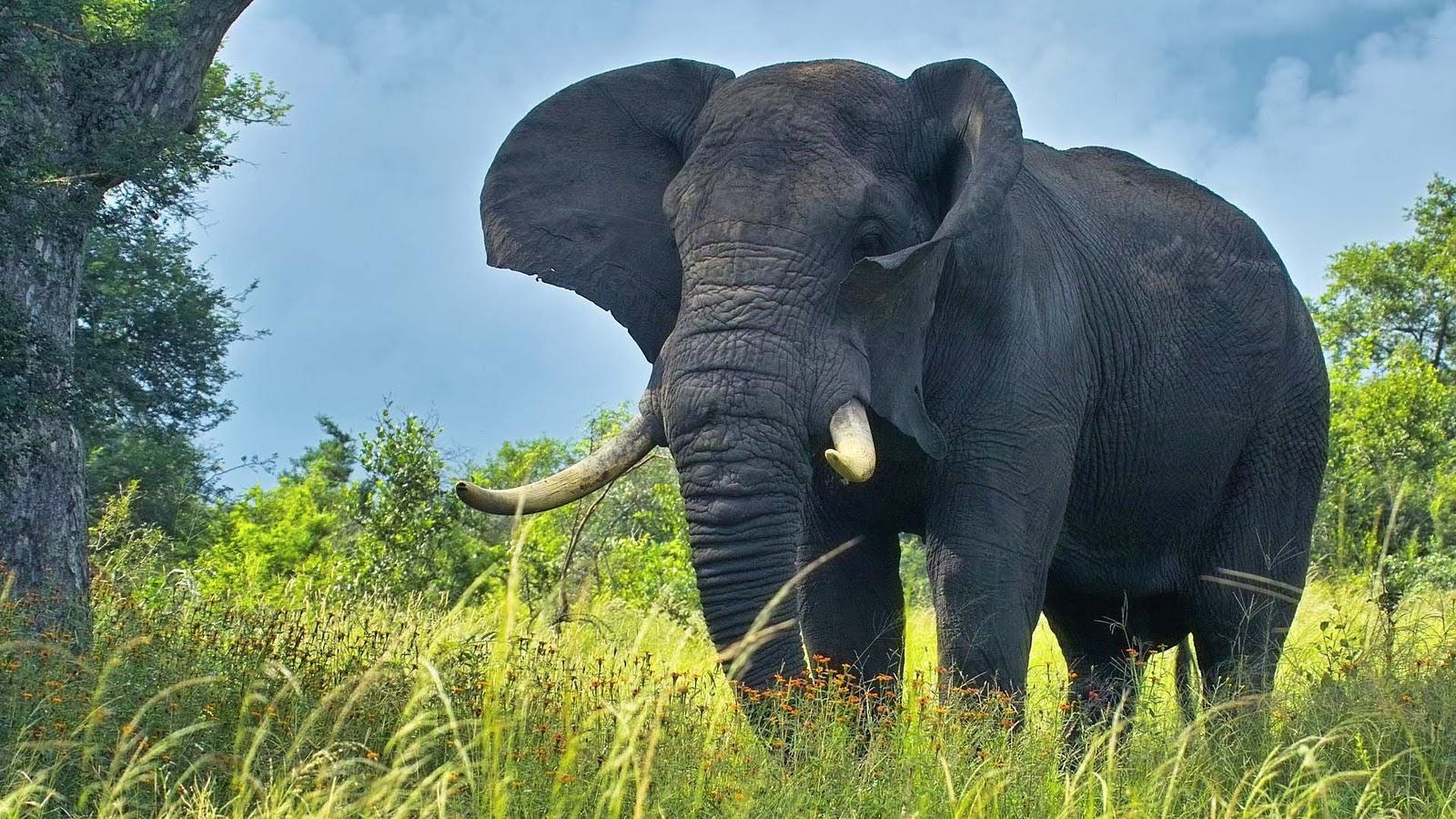 elephants wallpapers world - photo #9