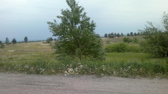 Вид из окна проезжающей машины