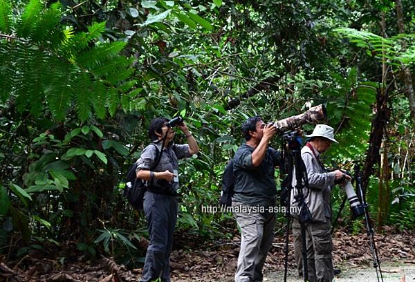Pesta Burung Borneo