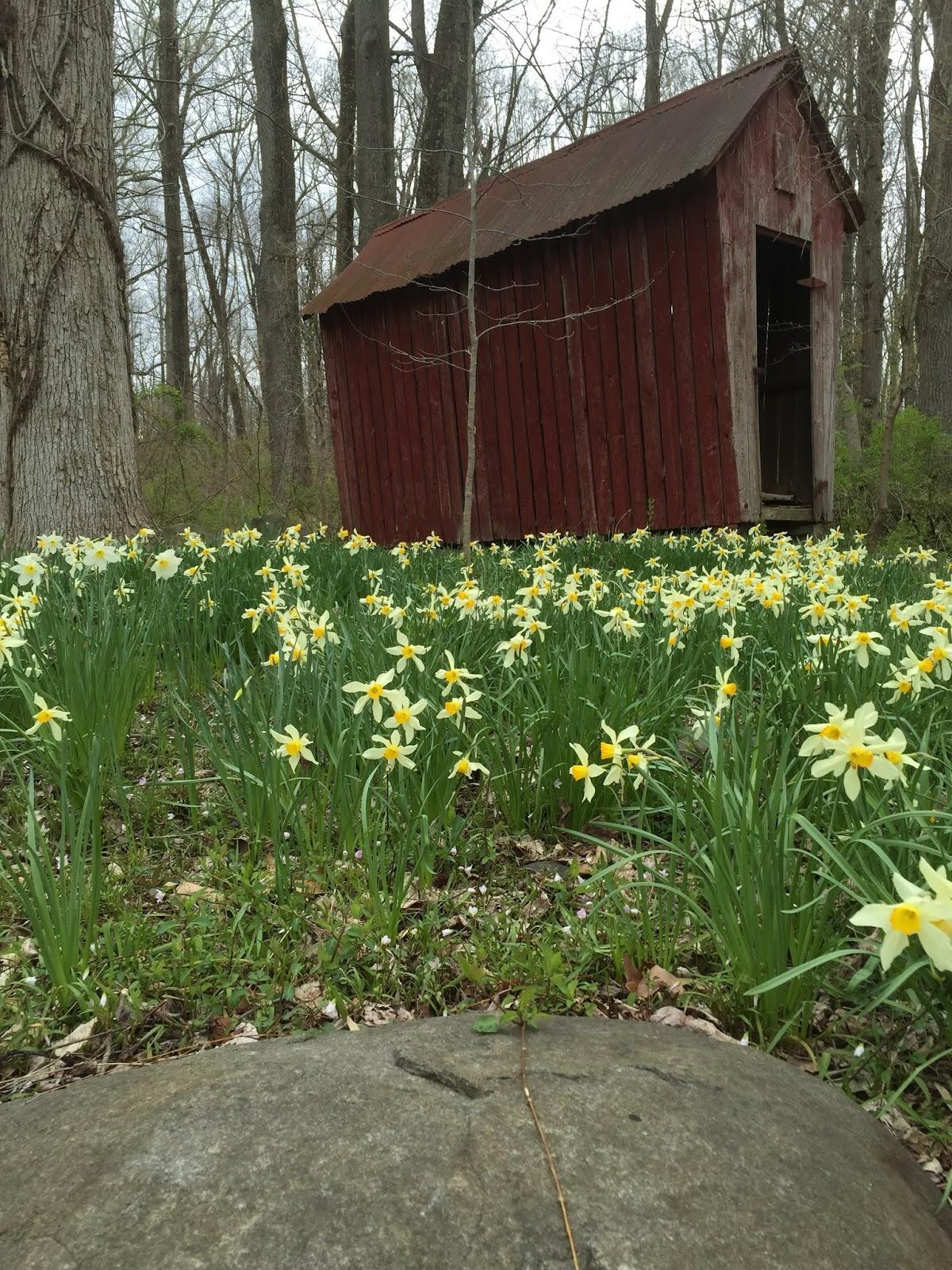 Some Spring Views At Herrontown Woods Princeton Nature Notes