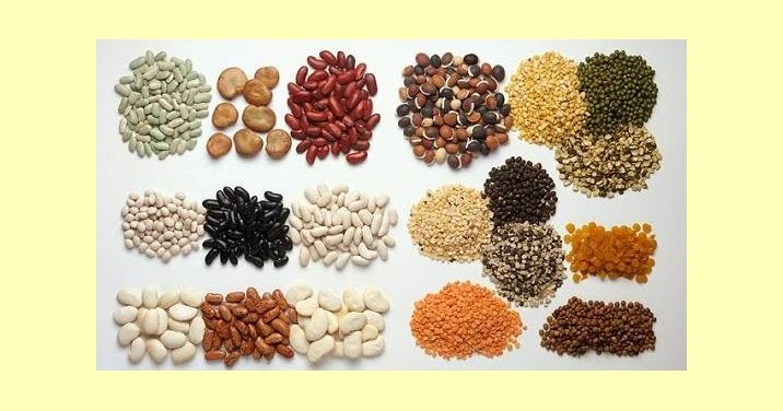 Proses dan Pengertian Metabolisme Protein