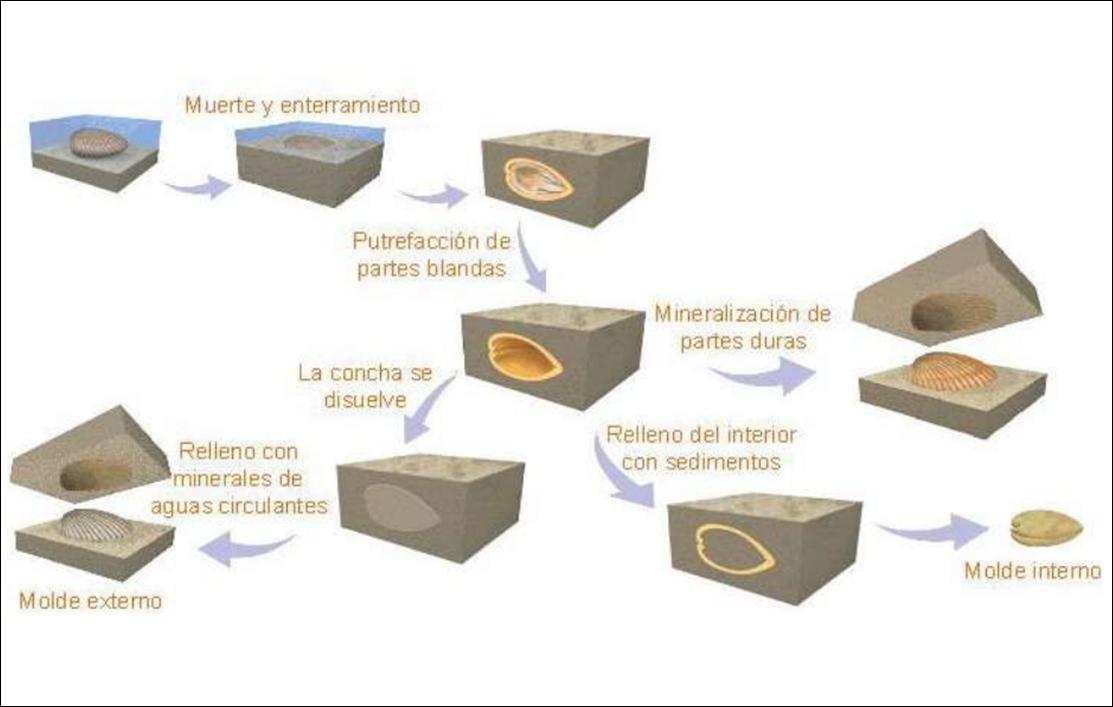 Qu nos cuentan los f siles gori gori for Procesos de preelaboracion y conservacion en cocina pdf
