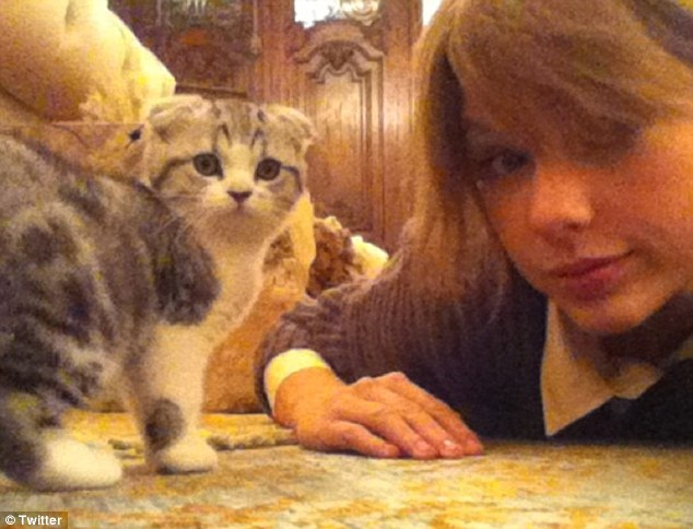 Taylor Swift Twit Pics Her Kitten, Meredith a Scottish Fold