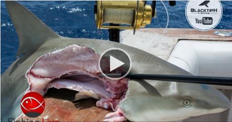 And they told me he won't bite... Half human half shark ... |Half Human Half Shark