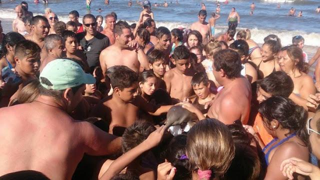 La idiotez humana… Sacan del agua a Delfín bebé para tomarse Selfies con él, y muere…