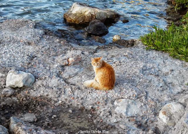 rudo-biały gecki kot na brzegiem greckiego morza