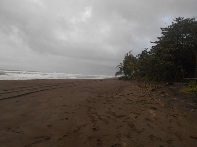 Beaches in Torutguero national park