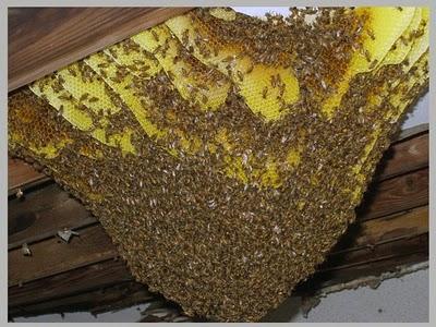Deformutilation Honeybee Home Invasions Part Ii