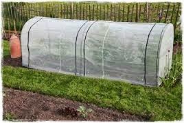 "<img src=""mini greenhouse9.jpg"" alt=""mini green house"">"