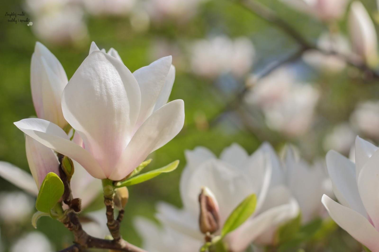 5 sposobów na wiosenne przesilenie