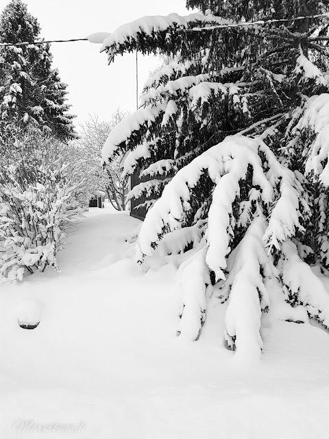 mustavalkoista lunta talvi piha